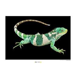 Komar National Geographic WB-NG-037-70x50 - Quadro da parete con immagine di animali, stampa di animali, stampa di animali, ritratti