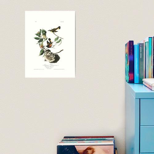 Amerikanischer Gartenrotschwanz - John James Audubon Kunstdruck