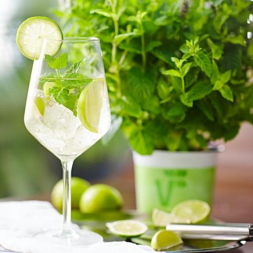 Kräuterpflanze Hugo-Cocktail-Minze, im ca. 12 cm-Topf
