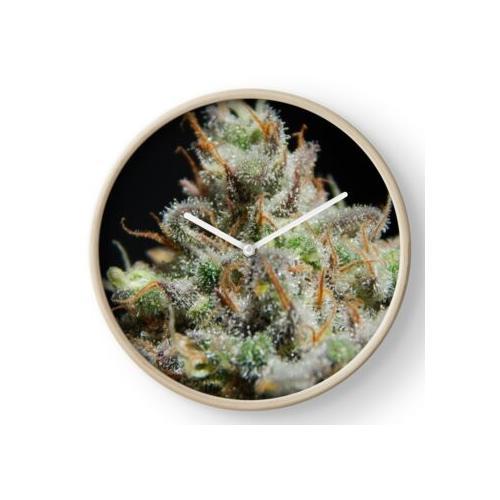 Cannabis-Trichome Uhr
