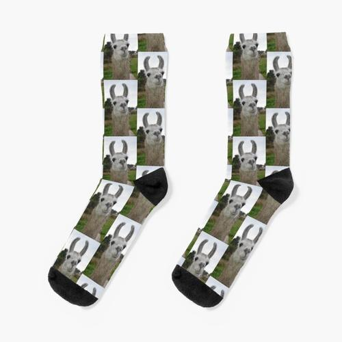 Lama Socken