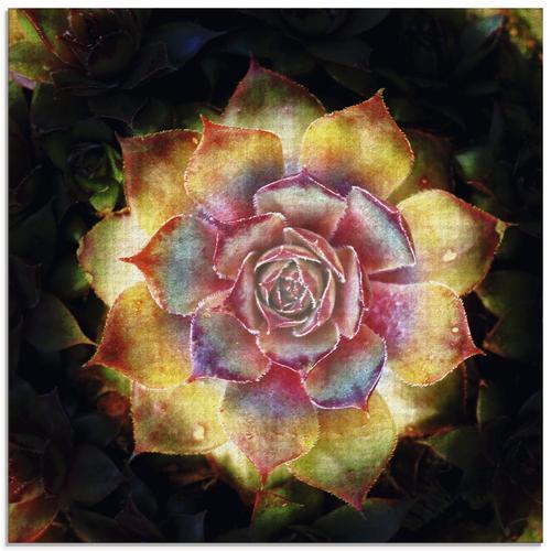Artland Glasbild Hauswurz, Pflanzen, (1 St.) gelb Glasbilder Bilder Bilderrahmen Wohnaccessoires