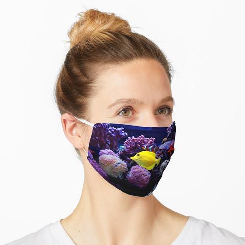Aquarium - Fisch - Salzwasserfisch - Korallenstern Maske