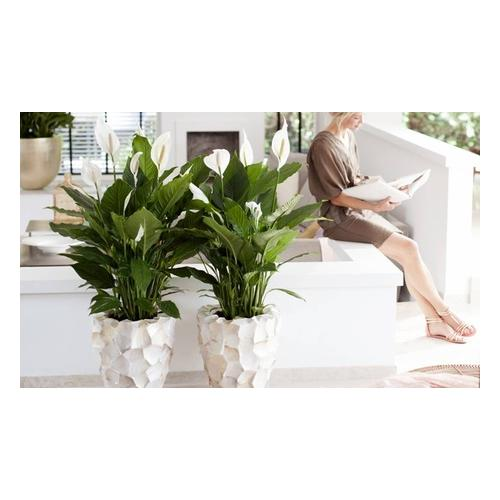Einblatt-Pflanzen: 4er-Set