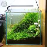 Chihiros-cultiver des plantes de...
