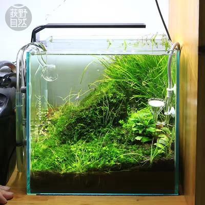 Chihiros-cultiver des plantes de style ADA, lumière LED mini clips pour aquarium, aquarium,