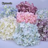 Kyunovia – fleurs d'hortensia en...