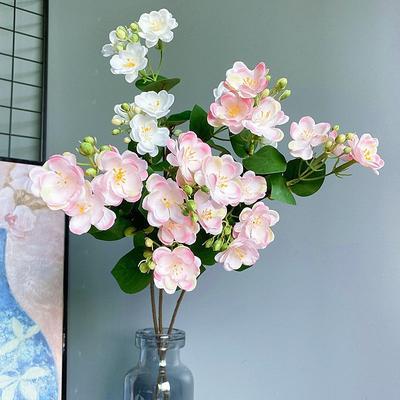 Nouvelle branche de fleur de jas...