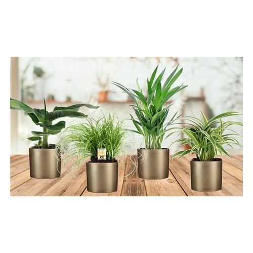 Haustierfreundliche Zimmerpflanzen: 8er-Set