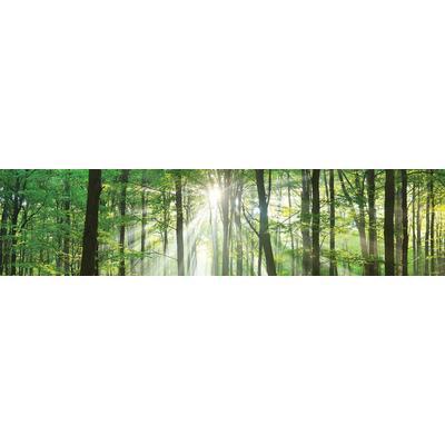 Consalnet Vliestapete Wald in der Sonne, verschiedene Motivgrößen, für die Küche grün Vliestapeten Tapeten Bauen Renovieren