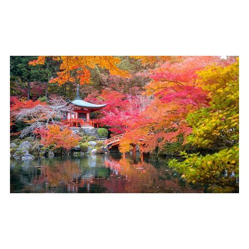 japanische Ahorne: 8