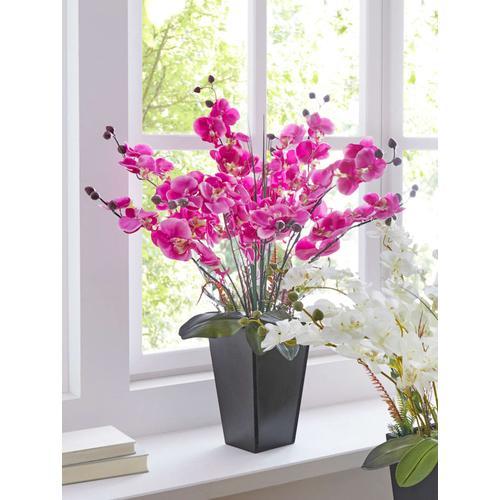Orchidee Im Topf IGEA Fuchsia