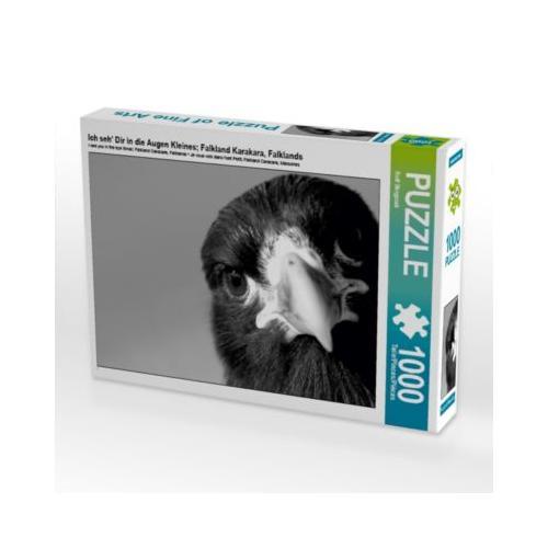 Ich seh' Dir in die Augen Kleines; Falkland Karakara, Falklands Foto-Puzzle Bild von Rolf Skrypzak Puzzle