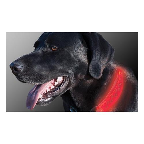 Hundehalsband-Aufsatz mit LED-Licht: 2