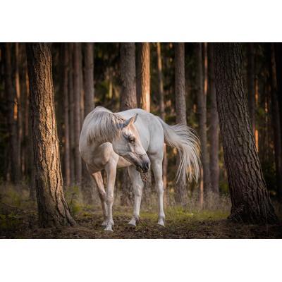 Consalnet Papiertapete Pferd im ...