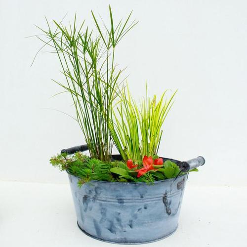Miniteich-Wanne Zinkoptik, ca. 30 cm mit 4 Wasserpflanzen